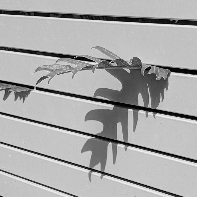 Plant Shadows 1 of 3  I love the deephellip